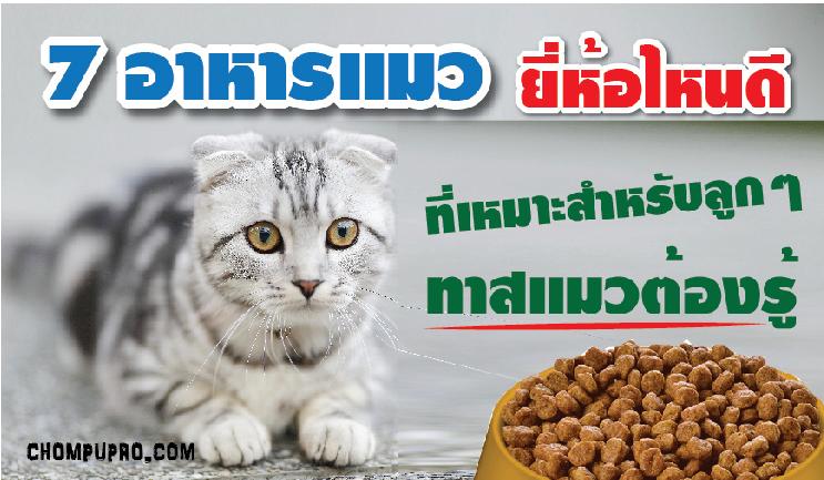 อาหารแมว